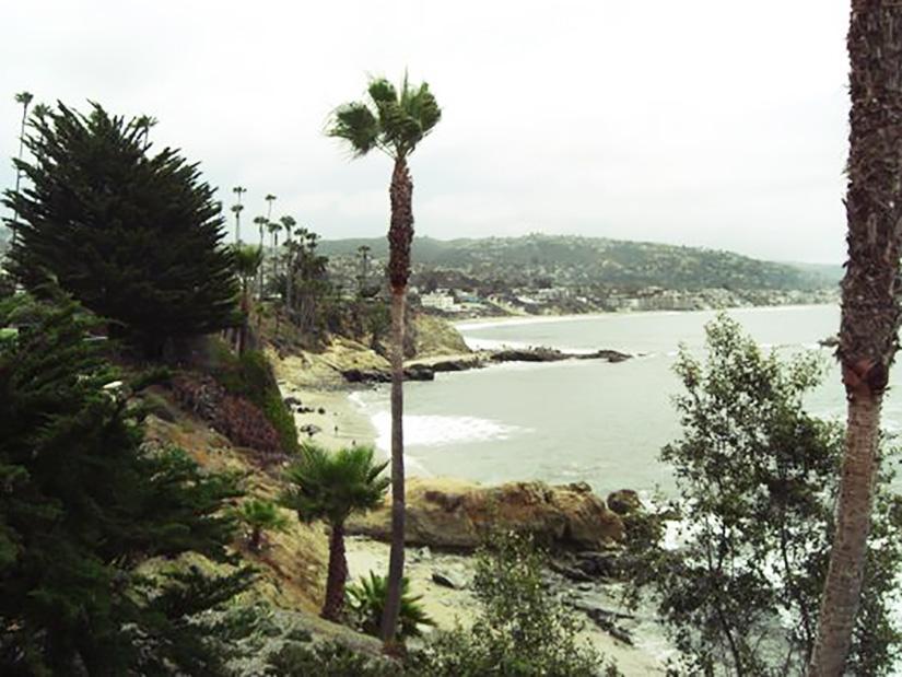 Laguna Beach Palms